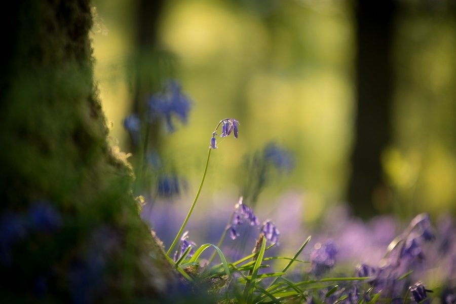 Ultimate Guide to Spring Photography