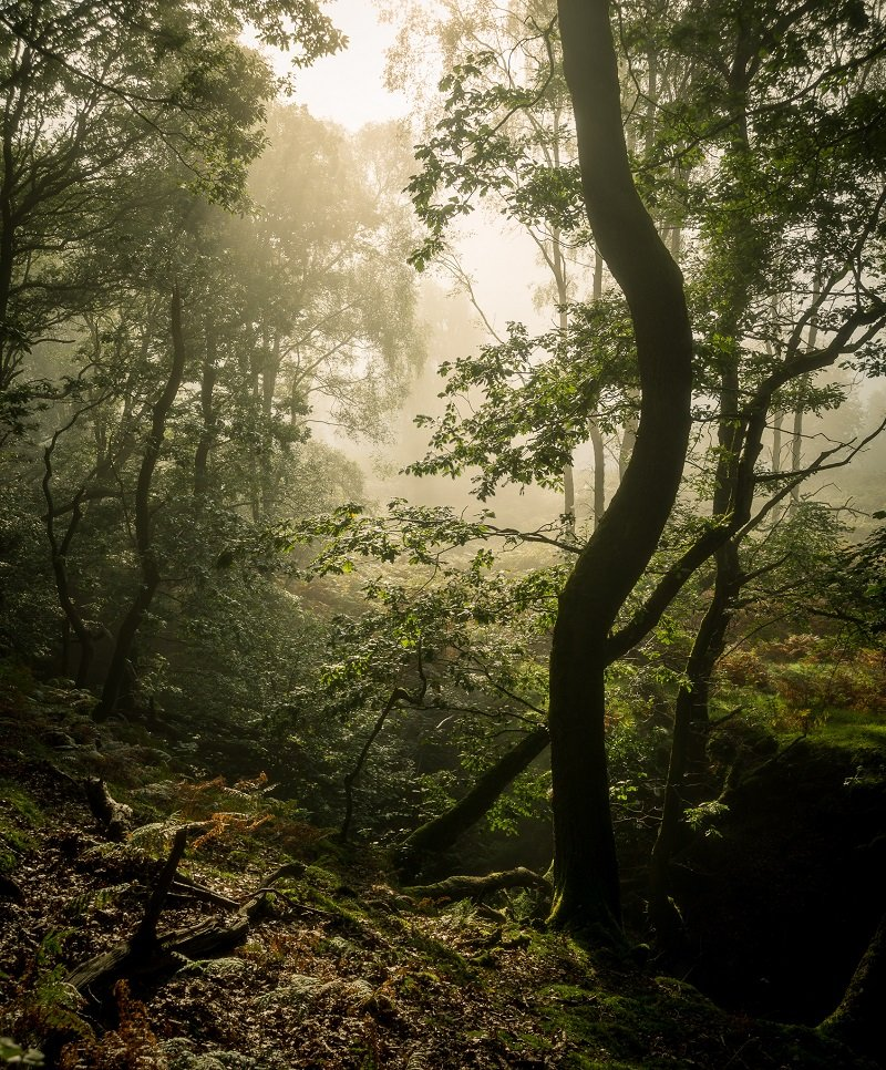 Ultimate Guide to Forest Photography - Tips and Tricks