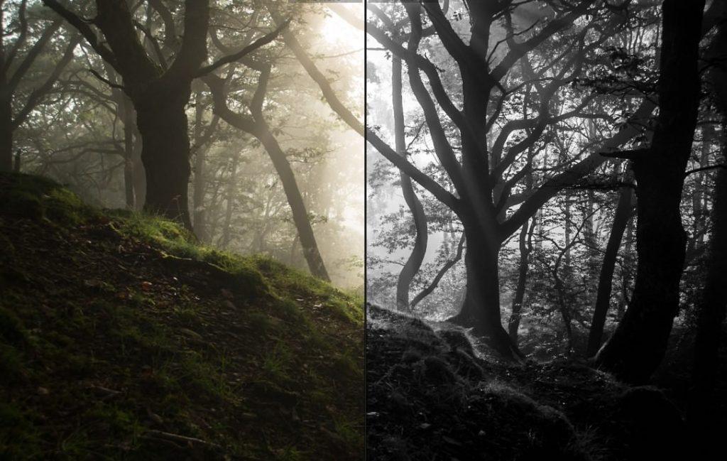 Forest Photography Lightroom Presets