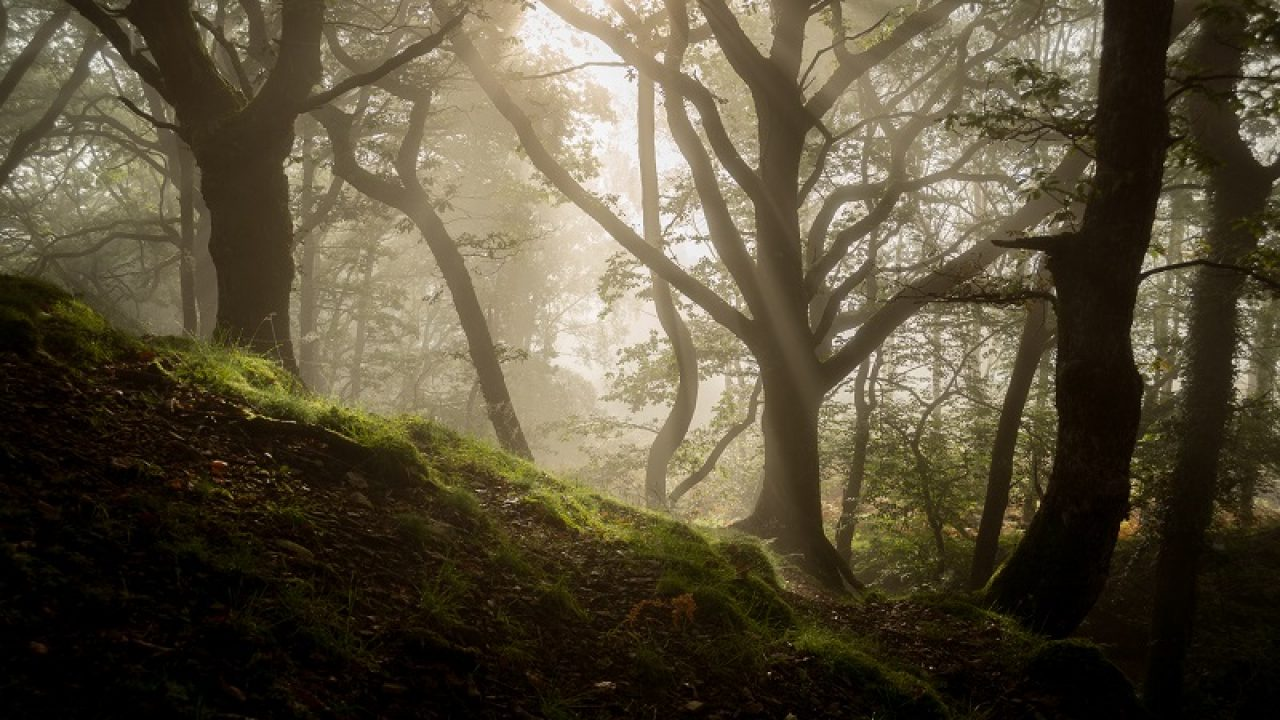 Ultimate Guide To Forest Photography Tips And Tricks Click And Learn Photography