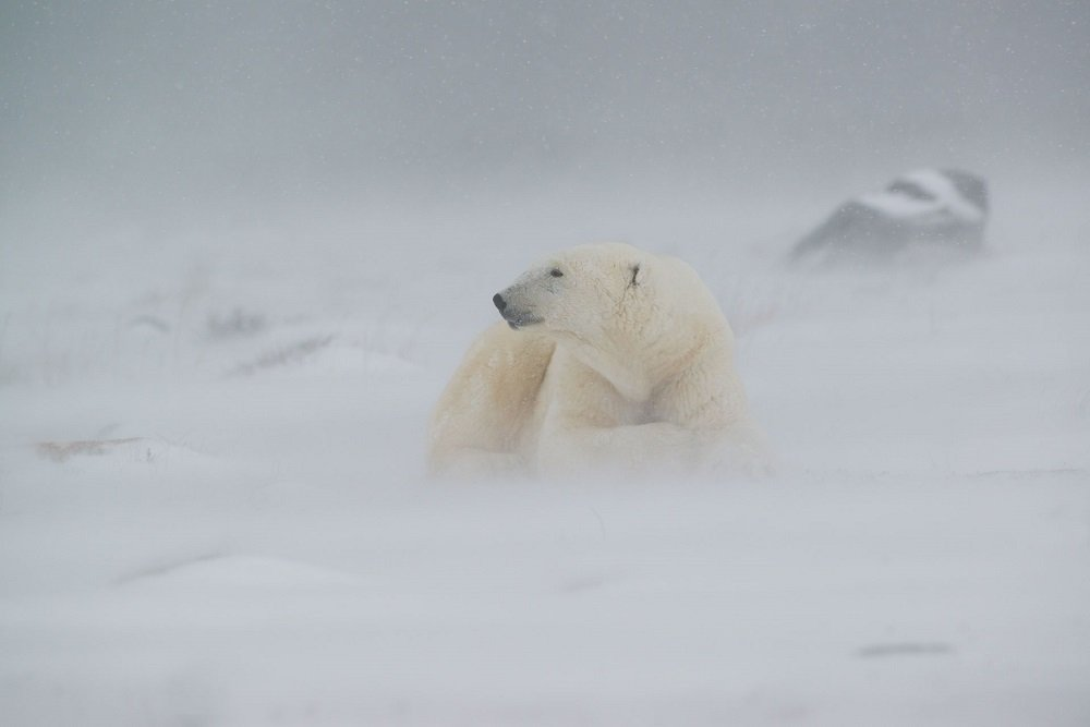 Behind the Lens - Andrew Bazeley wildlife photography