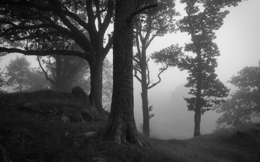 7 tips for black and white landscape photography (and why you should try it)