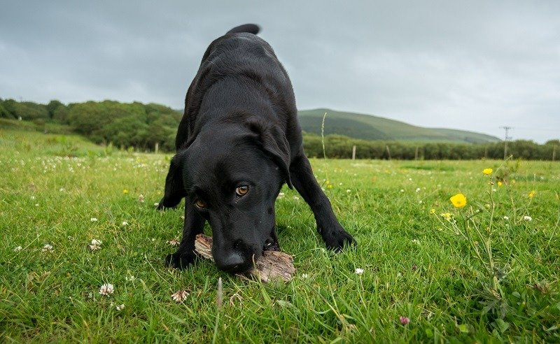 photography tips for dogs